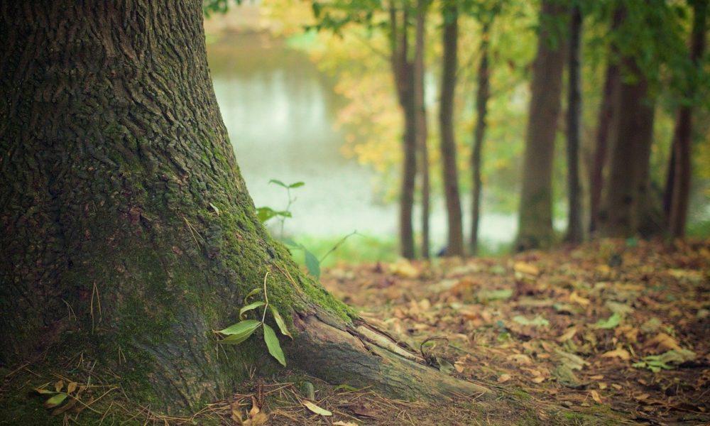 Prześliczny oraz {zadbany zieleniec to nie lada wyzwanie, zwłaszcza jak jego pielęgnacją zajmujemy się sami.